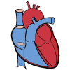 Dott. Luca Paolini Cardiologo